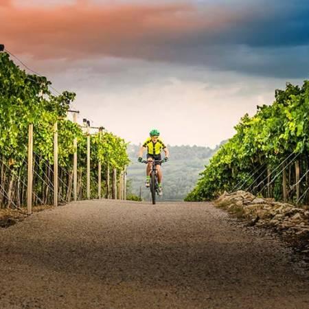 Пересекая Виноградники